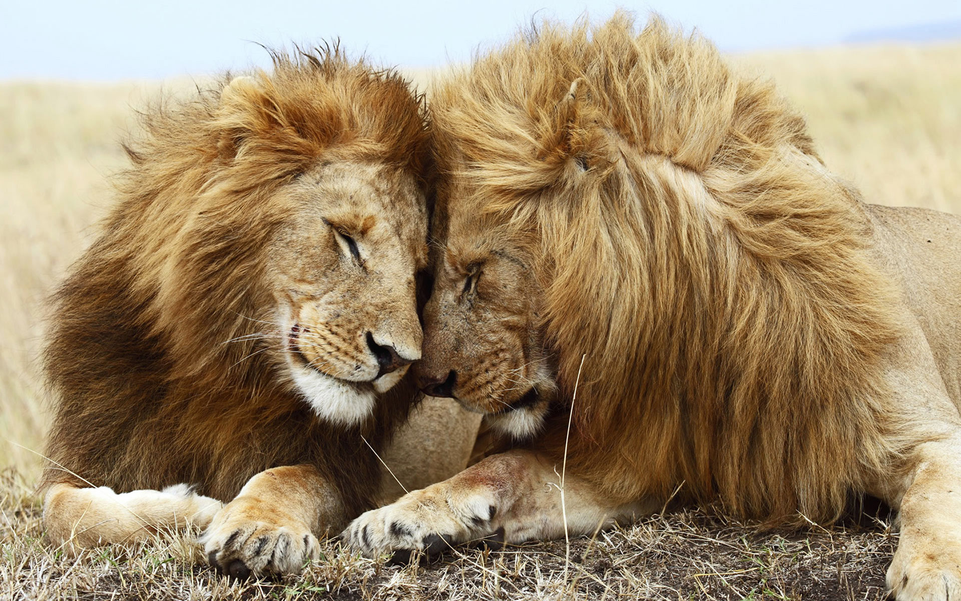 Les animaux d 39 afrique 1 re partie dictionnaire des animaux diconimoz - Babouin et belette ...