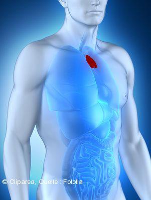 Die Thymusdrüse - brauchen wir die überhaupt? - Gesundheitsberatung ...