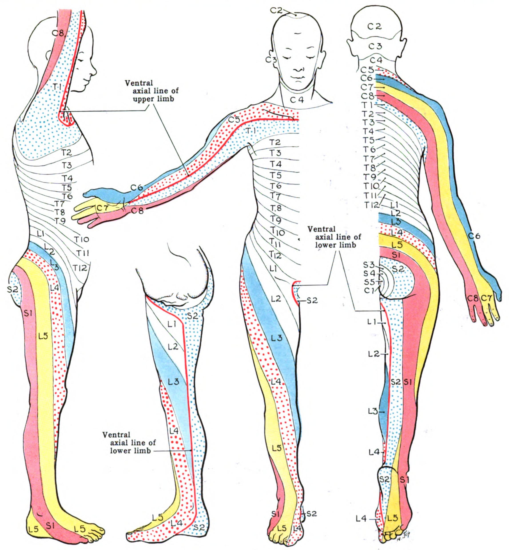症 根 頚椎 性 神経 症