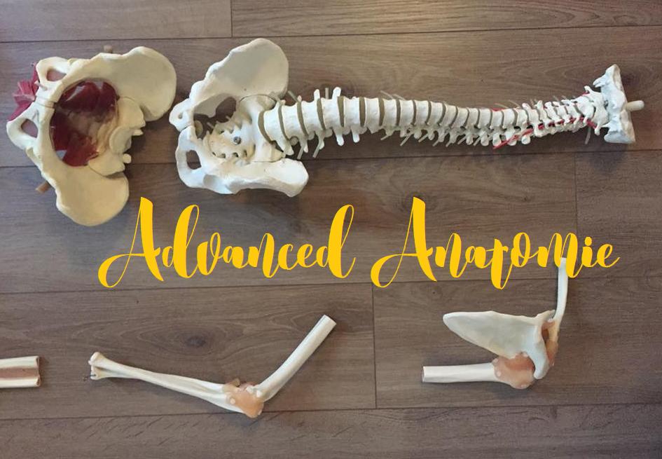 Yoga Anatomie und Physiologie Advanced - Sunny Mind Yoga - Yoga in ...