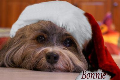 Auch Bonnie musste diese alberne Mütze aufsetzen !
