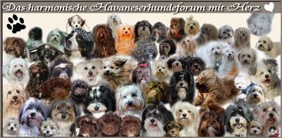 Das ist Mamas Hundeforum , mit den nettesten Foris und ihren Hunden , die es gibt !
