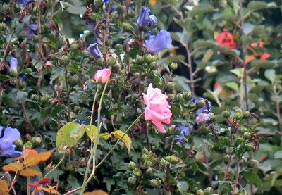 02. September 2016 - Knospen, wachsen, blühen, welken, vergehen...