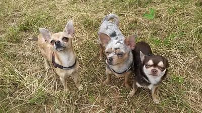 Benita, Kiwi und Ayk
