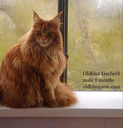 Олдблюз Гарфилд - кот кастрат