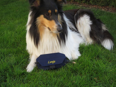 Lenja, (Rough Collie)