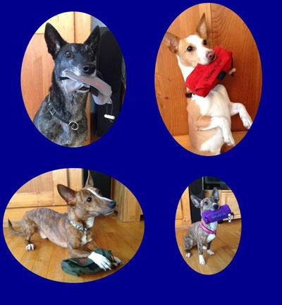 Alle vier Hunde leben bei www.goldschakal.ch
