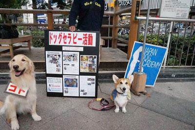 京都東寺で開催された樋口宗孝がん研究基金による「Rock Beats Cancer Fes Vol.3」にドッグセラピーで参加しました。