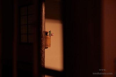 須田悦弘さんによる木彫の「竹花入」と花