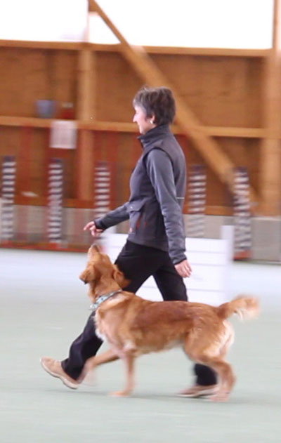 Hundeschule DreamTeam Obedience 3 Prüfung Clever Forever Emotional Honey