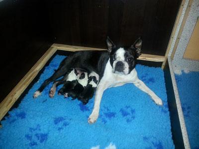 Ein Rüde und zwei Mädchen, 30 Minuten nach der Geburt !!!