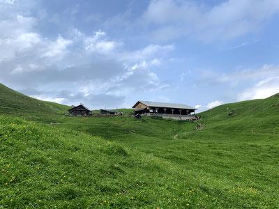 Die Alp Oberfeld