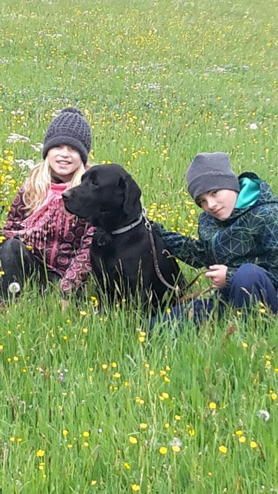 Labradornotfall Paul hat seine Traumfamilie gefunden :-)