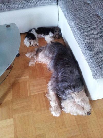 Ihr neuer großer Freund Strolchi :-)