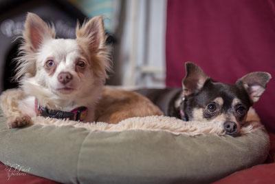 Merle und Muffin haben gemeinsam ein neues Zuhause gefunden :-)