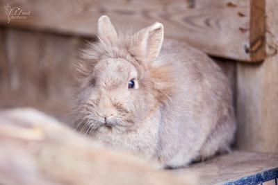 Wir wünschen allen zwei- und Vierbeinern ein gesundes, erholsames und leidfreies Osterfest :-)