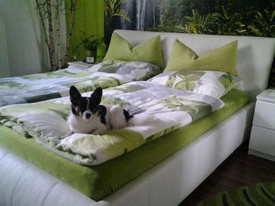 Unser Herr Schröder hat es endlich geschafft, angekommen in seiner Familie hat er gleich das Bett erobert und alle Herzen auch :-)