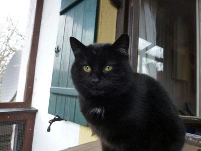 Auch unsere kleine Kämpferin Lütte, die angefahrene und gelähmte Katze, die auf Gut Aiderbichel ihr Zuhause gefunden hatte musste nun wegen Leberversagen gehen. Du wirst uns fehlen kleine Lütte...