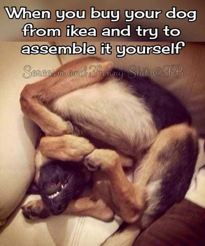 Wenn du deinen Hund bei ikea kaufst und dann versuchst, ihn selbst zusammen zu bauen... :-)