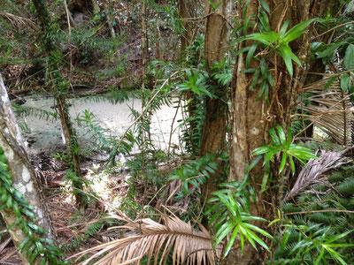 wanggoolba-creek-fraser-island