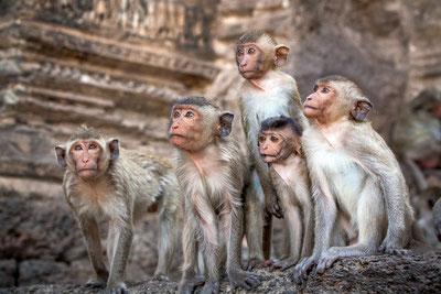 Monkey Mind beruhigen. Yoga, Meditation für Anfänger, Meditationsübung, Meditationstipps, Entspannung, Gelassenheit, Monkey Mind beruhigen.