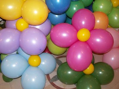 Ballonblumen in verschiedenen Farben