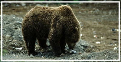 Alaska_1_Reisefotograf_Abenteurer_Jürgen_Sedlmayr_05