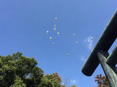 ※靖国神社の白い鳩さん