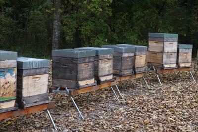 Bienenstöcke vom Stieglgut Wildshut