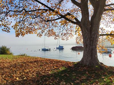 Zürichsee im Herbst der nebel verzieht sich und die Sonne ist zu sehen. Laub liegt auf dem Boden und im Hintergrund schwimmen Bote.