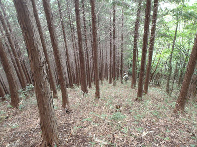 揖斐郡内某所の山林