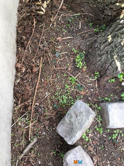 Un espace non planté, au pied d'un arbre, en fond de massif, dans mon jardin naturel