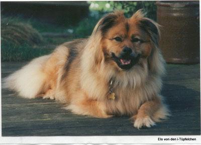 Olanda mit 11 Jahren