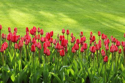 Smart Home für den Garten