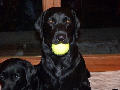 Der grösste Welpe hat den Ball