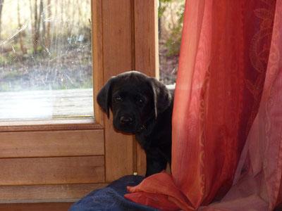 Soll ich noch einen Vorhang geben ?