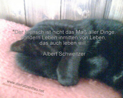 Catsitting, Mobile Katzenbetreuung, Catsitter & Gassiservice, Tiertaxi - Saarland - St.Wendel, Wadern, Losheim, Freisen