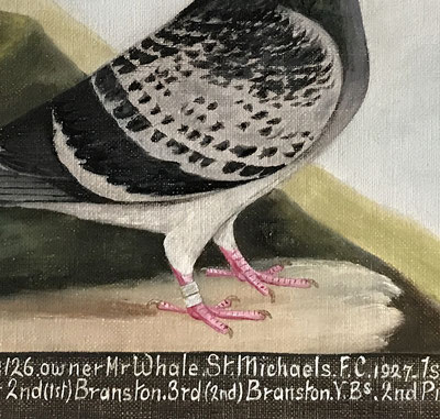 E H Windred Portrait of a racing pigeon