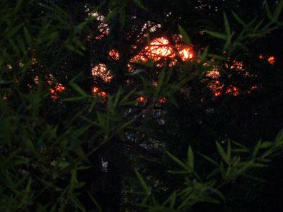 coucher de soleil sur Bouquet de Flammes - Capmal -