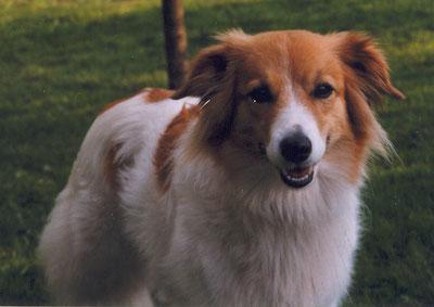 Quirly (Mix Tochter von Sonny) Turnierhundesport BH, Agility A1-A3 wurde 15 Jahre alt