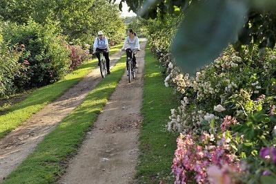 La Route de la Rose et les Jardins de Roquelin à Vélo