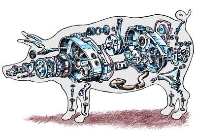 Cochon par François Bouët