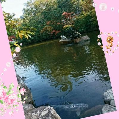 淡路島のいざなぎ神宮の池には鯉や亀がいます