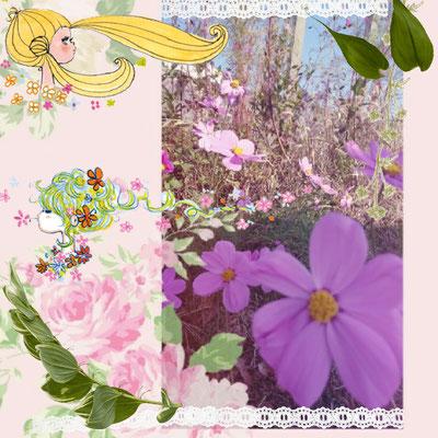 地域の集会所に咲いているコスモスの写真に加工をしてみました。