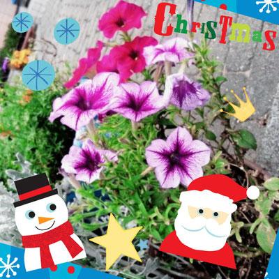 建物のすみに植えられた花でも、私の写真加工にかかれば、ほら、おしゃれに変身でーす‼️