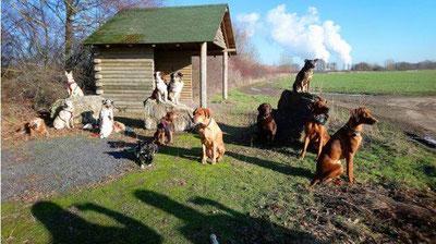 Erlebniswanderung mit Hund