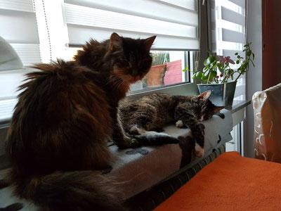 Minka und Strolchi, Foto: Oetken