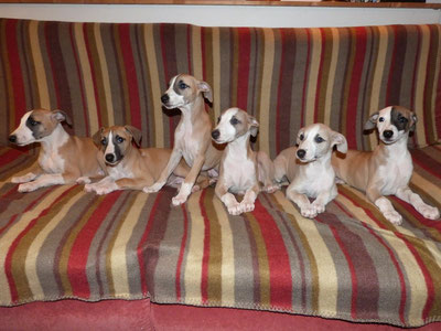 de gauche à droite : Joli-Boy, Joli-Rêve, Joli-Flash, Jolie-Flamme, Jolie-Môme, Jolie-Lune