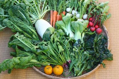 自然栽培(無農薬・無肥料)の旬野菜セット大(大根、人参、かぶ、ラディッシュ、かつお菜、ほうれん草、タァサイ、ゆず、チンゲンサイ)