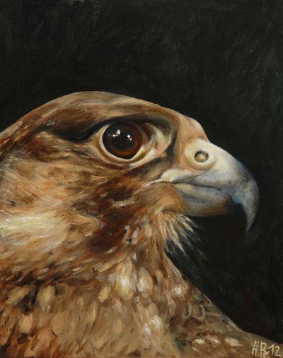 Hedwig. Juveniler Wanderfalke.Öl auf Leinwand.40x50cm.2012